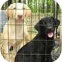 Adopt A Pet :: SAVANNAH - Wakefield, RI
