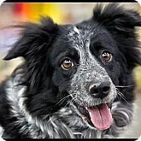 Adopt A Pet :: Lilly - Wickenburg, AZ
