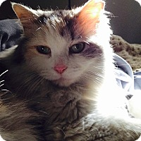 Adopt A Pet :: Alley Lane - Chicago, IL