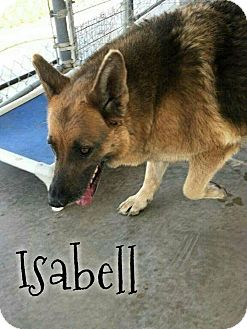 German Shepherd Dog/German Shepherd Dog Mix Dog for adoption in DeForest, Wisconsin - Isabell
