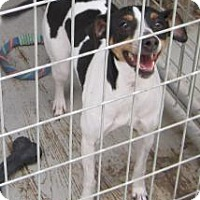 Adopt A Pet :: Momma Bear - New palestine, IN