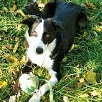 Adopt A Pet :: Millie - Minerva, OH