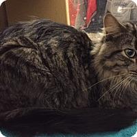 Adopt A Pet :: Mr. Ellington - Manchester, CT