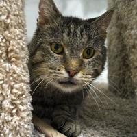 Adopt A Pet :: Woody Morris 28 + - Mentor, OH