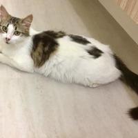 Adopt A Pet :: Maren Morris - Redmond, WA