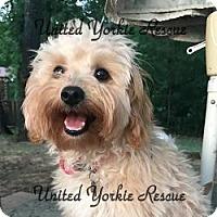 Adopt A Pet :: VIanne - Martinsburg, WV