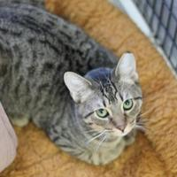 Adopt A Pet :: Hiccup - Covington, LA