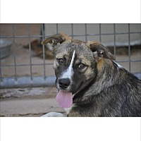Adopt A Pet :: Chevy in CT - East Hartford, CT