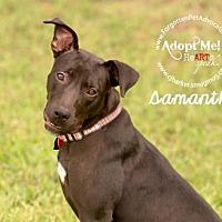 Adopt A Pet :: Samantha - Pearland, TX