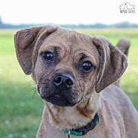 Adopt A Pet :: Oscar - Troy, IL