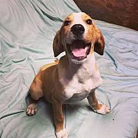 Adopt A Pet :: Peanut - Rexford, NY