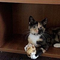 Adopt A Pet :: Jasmine - Tampa, FL