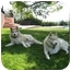 Photo 3 - Siberian Husky Dog for adoption in Southern California, California - KD