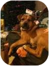 Boxer Mix Dog for adoption in Paintsville, Kentucky - Gonzo