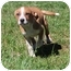 Photo 4 - Labrador Retriever/Cattle Dog Mix Puppy for adoption in Hagerstown, Maryland - Delilah