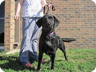 Labrador Retriever/Golden Retriever Mix Dog for adoption in Junction City, Kansas - Beauty