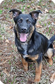 German Shepherd Dog Puppy for adoption in Metairie, Louisiana - Remmington