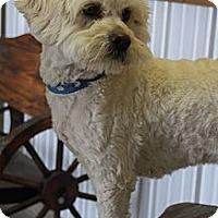 Adopt A Pet :: June - Wytheville, VA