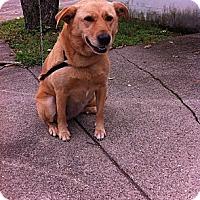 Adopt A Pet :: Dixie - Peru, IN