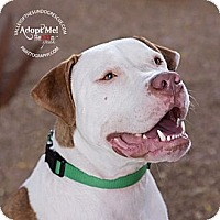 Adopt A Pet :: Turner - Mesa, AZ