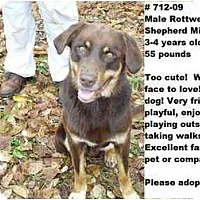 Adopt A Pet :: # 712-09 @ ANIMAL SHELTER - Zanesville, OH