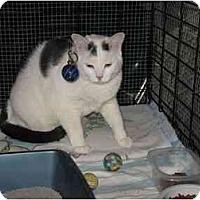 Adopt A Pet :: Flash - Bristol, RI
