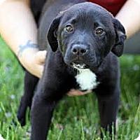 Adopt A Pet :: Sammie - South Jersey, NJ
