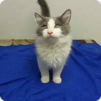 Adopt A Pet :: Mumbai - St. Louis, MO