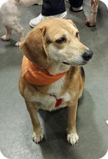 Beagle Mix Dog for adoption in Alexis, North Carolina - Daisy