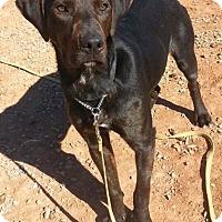 Adopt A Pet :: Zorro - Alamogordo, NM