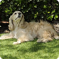Adopt A Pet :: Esther - Rancho Mirage, CA