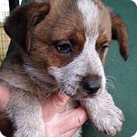 Adopt A Pet :: Alaric - Gainesville, FL