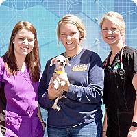 Adopt A Pet :: Hilary - Cashiers, NC