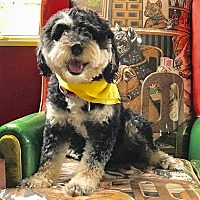 Adopt A Pet :: ADOPTION PENDING- Lucinda - Burbank, CA