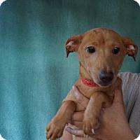 Adopt A Pet :: Peach - Oviedo, FL