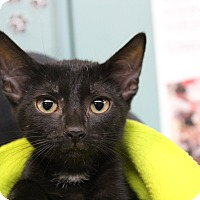 Adopt A Pet :: Alphonse - Sarasota, FL
