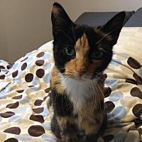Adopt A Pet :: Panda - Cambridge, ON