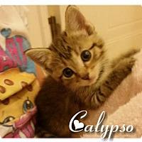 Adopt A Pet :: Calypso - Columbia, SC