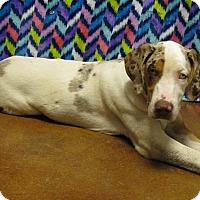 Adopt A Pet :: Ivy - Groton, MA
