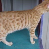 Adopt A Pet :: Buster - New Iberia, LA