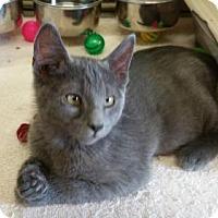 Adopt A Pet :: Aqua - Maquoketa, IA