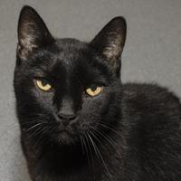 Adopt A Pet :: Hunter - Bellevue, WA