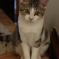 Adopt A Pet :: Darling - Philadelphia, PA
