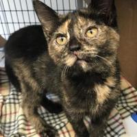 Adopt A Pet :: Eep - Washington, IA