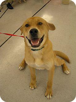 Labrador Retriever Mix Dog for adoption in Portage la Prairie, Manitoba - Jaime
