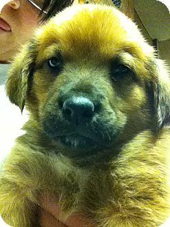 Hound (Unknown Type) Mix Puppy for adoption in Waldorf, Maryland - Fin