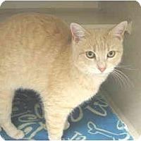 Adopt A Pet :: James - Mesa, AZ