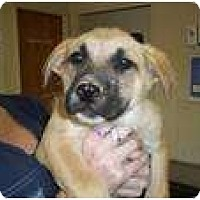 Adopt A Pet :: Katie (pending adoption) - Adamsville, TN