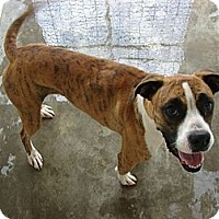 Adopt A Pet :: Sage - Fort Scott, KS