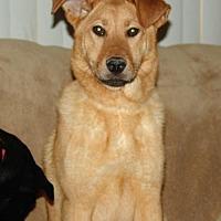 Adopt A Pet :: Chloe Barnwell - Rockaway, NJ